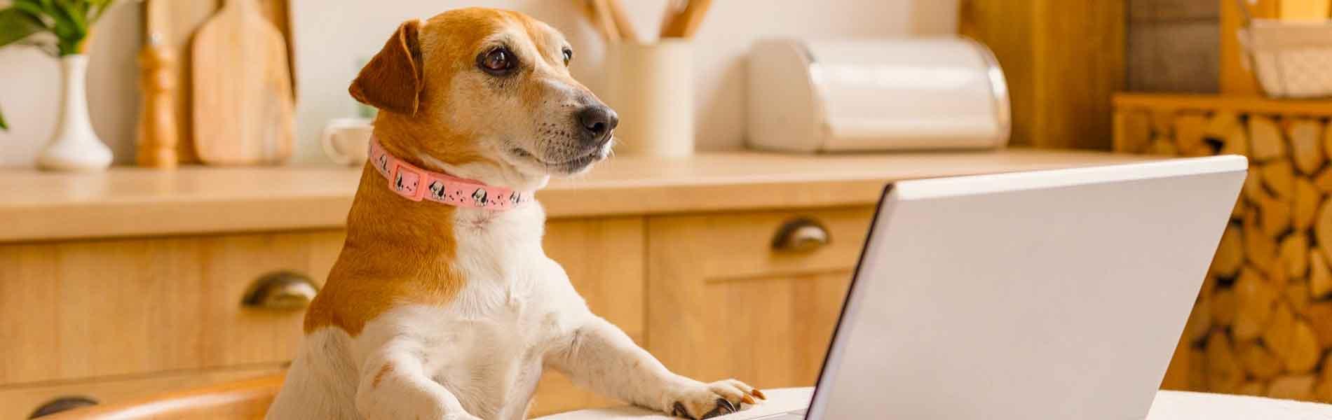 インターネットのトラブル、パソコン設定、Wi-Fi設置などプロが出張代行します